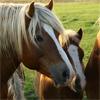 لعبة بازل صورة حصان