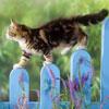 لعبة بازل القطة الشقية