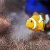 لعبة بازل صورة السمكة الملونة