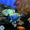 بازل السمكة الملونة