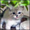 بازل صورة القطة الصغيرة