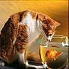 بازل القط و السمكة