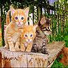 لعبة ترتيب صورة الثلاث  قطط